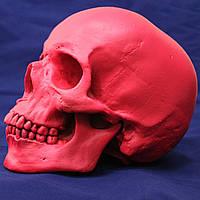 Череп рожевий з гіпсу, декоративний, в натуральну величину, фото 1