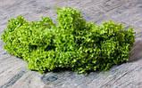 Семена салата Лолло Бионда / Lollo Bionda ТМ «Hortus» (Италия), банка 500 грамм, фото 3