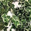 Искусственная лиана плющ с белым краем(5 шт в упаковке), фото 3