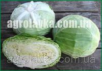 Семена капусты белокочанной НАОМИ F1(Kitano) 2500c