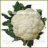 Семена капусты цветной ВАНЗА F1 (KS 35 F1)(Kitano) 2500c