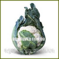 АКЦИЯ!!! Семена капусты цветной МИСОРА F1 (KS 22 F1)(Kitano) 1000c уценка срок годности до 11/17