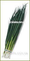 Семена лука на перо ВУЛКАН (Kitano) 100гр