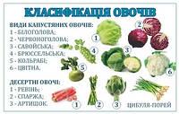 Кулинарный стенд Классификация овощей