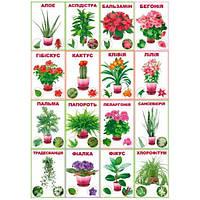 Свiт поздоровлень Комплект карточек Комнатные растения