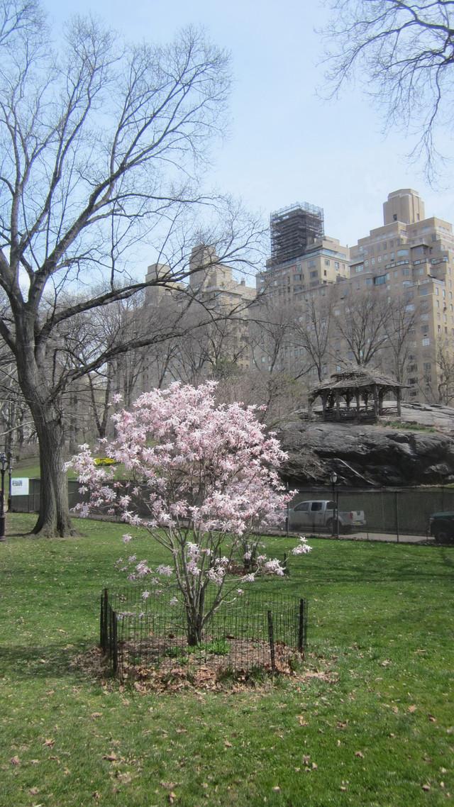 Раздел Сарафаны в пол - фото teens.ua - Нью-Йорк,Центральный парк