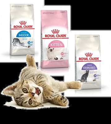 Сухой корм для котов в соответствии с возрастом и активностью