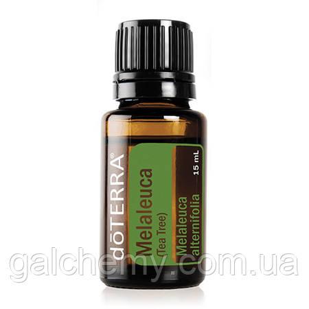 Melaleuca Essential Oil / Чайное дерево (Melaleuca alternifolia), эфирное масло, 15 мл