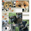 Зошит 12 лінія Тверда 82170 Лісові друзі ТЕТРАДА (25шт. в упаковке)