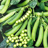 Горох овощной Преладо 3 000 сем.Сингента (Syngenta), фото 1