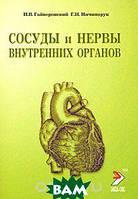 И. В. Гайворонский, Г. И. Ничипорук Сосуды и нервы внутренних органов