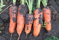 Семена моркови Абако F1 (1,4-1,6мм) \ Abaco F1 Seminis 200000 семян