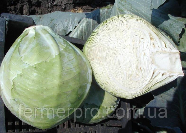Семена капусты Мандарин F1 \ Mandarin F1 2500 семян Clause