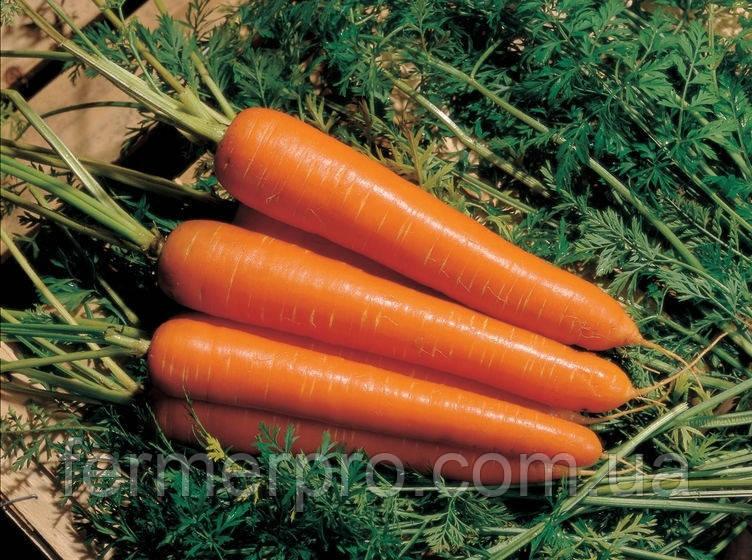 Семена морковь Нантиндо F1 0,5 кг  Clause (Клоз)