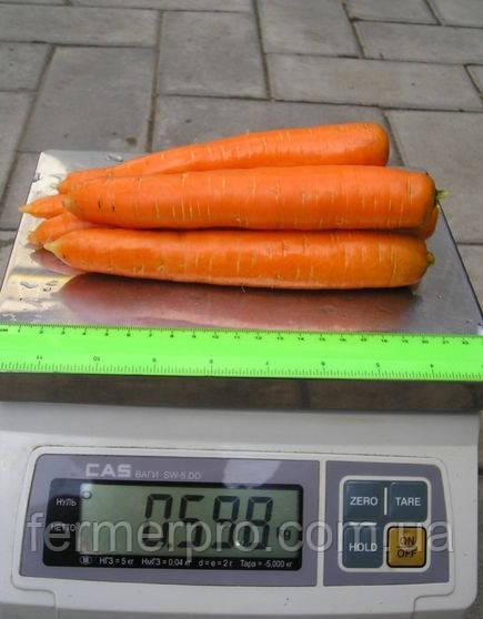 Семена морковь Майор F1 25000 семян Clause (Клоз)