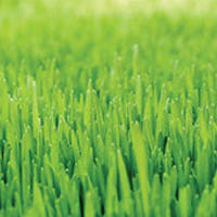 Як боротись із типовими проблемами газону?