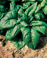 Семена шпинат Лагос \ lagos 250 грамм Clause