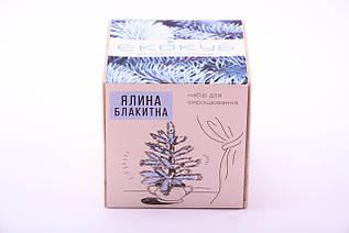 Набор для выращивания декоративных растений Экокуб Голубая Ель