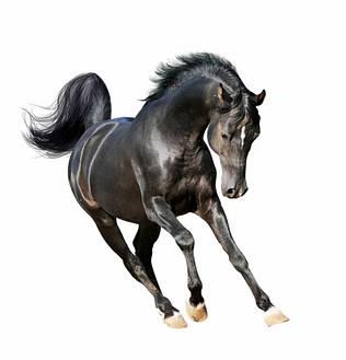 Лошадям