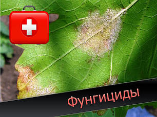 Фунгициды(защита от болезней)