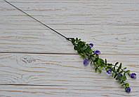 Ветка эвкалипта с фиолетов. цветом