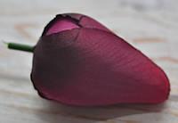 Головка тюльпана