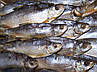 Сушилка для рыбы ,фруктов,овощей  усиленная защитит от насекомых 5 полочек 50*50*100см , фото 3