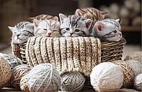 Действительно ли старым девам нужны кошки, или Как избавиться от стереотипа