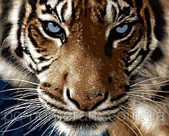 Рисование по номерам Взгляд тигра (BK-GX8767) 40 х 50 см (Без коробки)