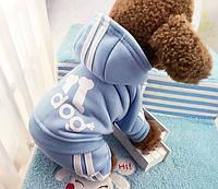 Зимняя одежда для маленьких собачек, фото 1