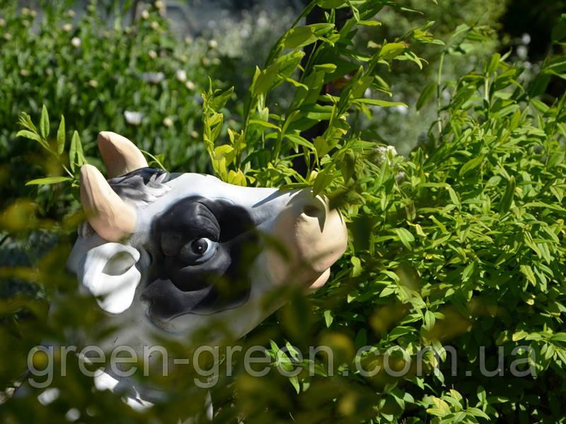 Корова лежачая