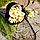 Кешью сырой ОПТ, фото 2
