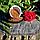 Семена льна, фото 2