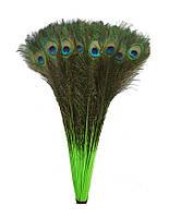 Перья Жар-птицы Павлина декоративные (Перо) Зелено-салатовые 75-80 см 5 шт/уп, фото 1