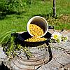 Пажитник (хельба, пажитник, шамбала, фенугрек)