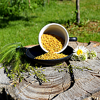 Пажитник (хельба, пажитник, шамбала, фенугрек), фото 1