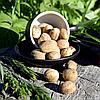 Мускатный орех целый (мелкий)