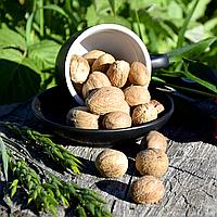 Мускатный орех целый (мелкий) , фото 1