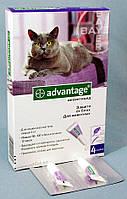АДВАНТЕЙДЖ 80-капли от блох для котов весом до 8кг