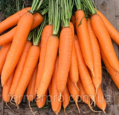 Семена моркови Сиркана F1 (1,8 -2 мм) 100000 семян  Nunhems (Нуменс)