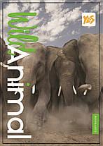 Тетрадь Yes A7 верхняя спираль 80 листов клетка Wild animals
