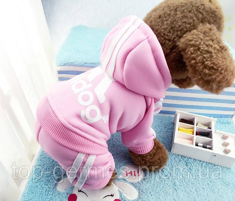 Зимняя одежда для маленьких собачек