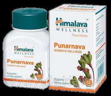 Пунарнава, Punarnava (60tab) тонизирующее и омолаживающее растение для почек