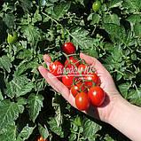 Семена томата ТУТИ-ФРУТИ F1, 250 семян, фото 5
