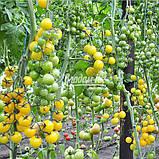 Семена томата ГОЛДВИН F1 , 250 семян, фото 4