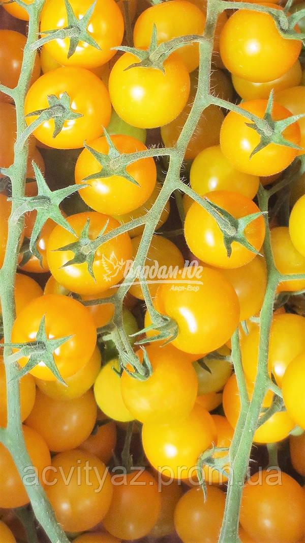 Семена томата ГОЛДВИН F1 , 250 семян