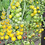 Семена томата ГОЛДВИН F1 , 250 семян, фото 6