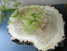 Срез дерева. Акация 21 - 25 см