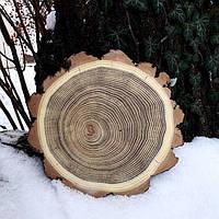 Срез дерева. Акация 26 - 30 см