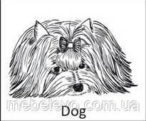 Novelty Dog